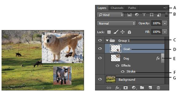 了解 Photoshop 图层的基础知识