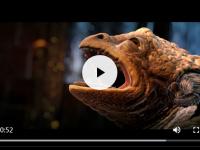 html5media 简单高效的 HTML5 视频音频播放器兼容性解决方案